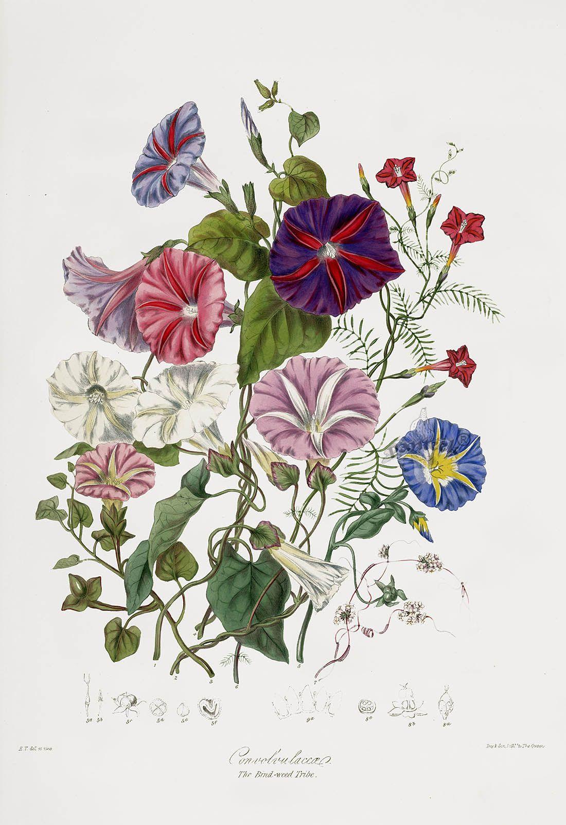 Pin on Printable Botanical Lovelies