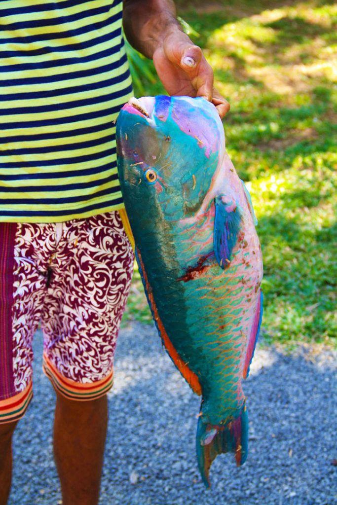 parrot_fish_colors_dots_bay_house_hiriketiya_sri_lanka