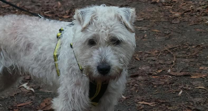 Teddy Loving Olly Seeks Calm Home Five Year Old Olly Is A Sweet Affectionate Boy Who Loves The Company Of Human Dogs For Adoption Uk Dogs Trust Dog Adoption