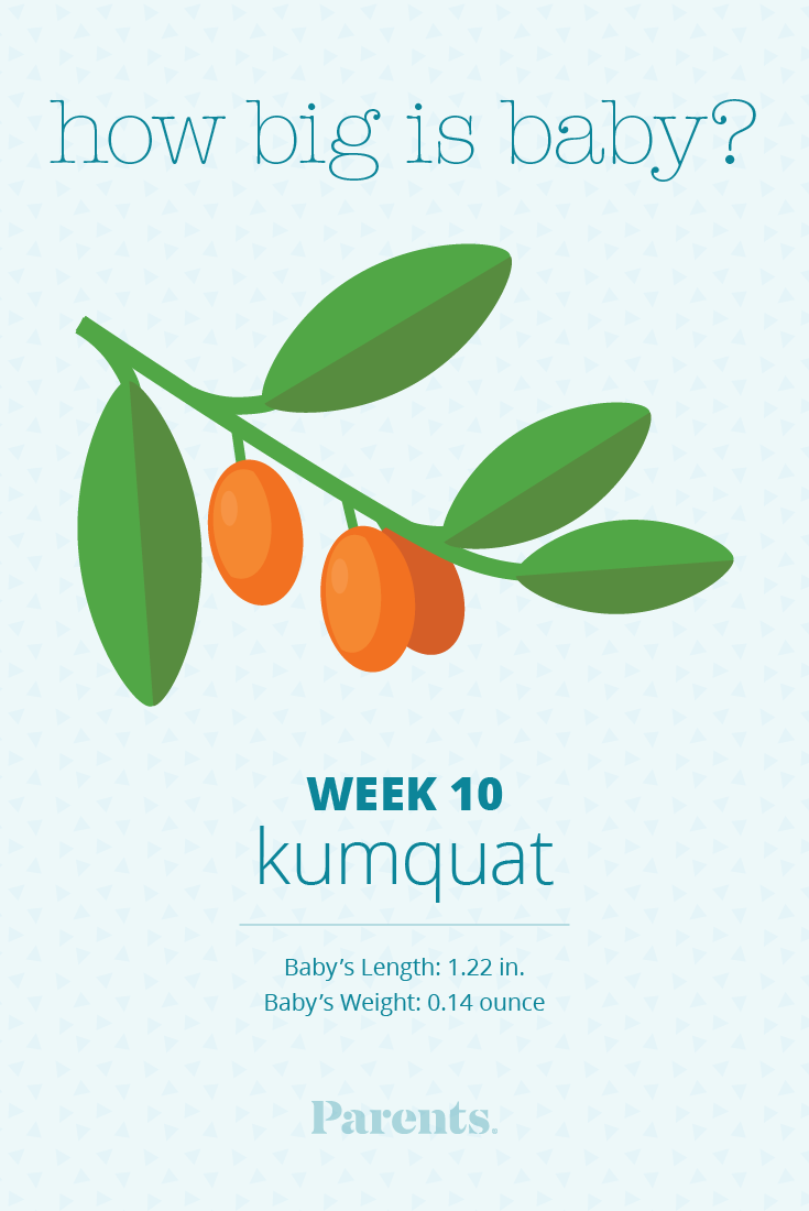 Learn what is happening with your baby's development in week