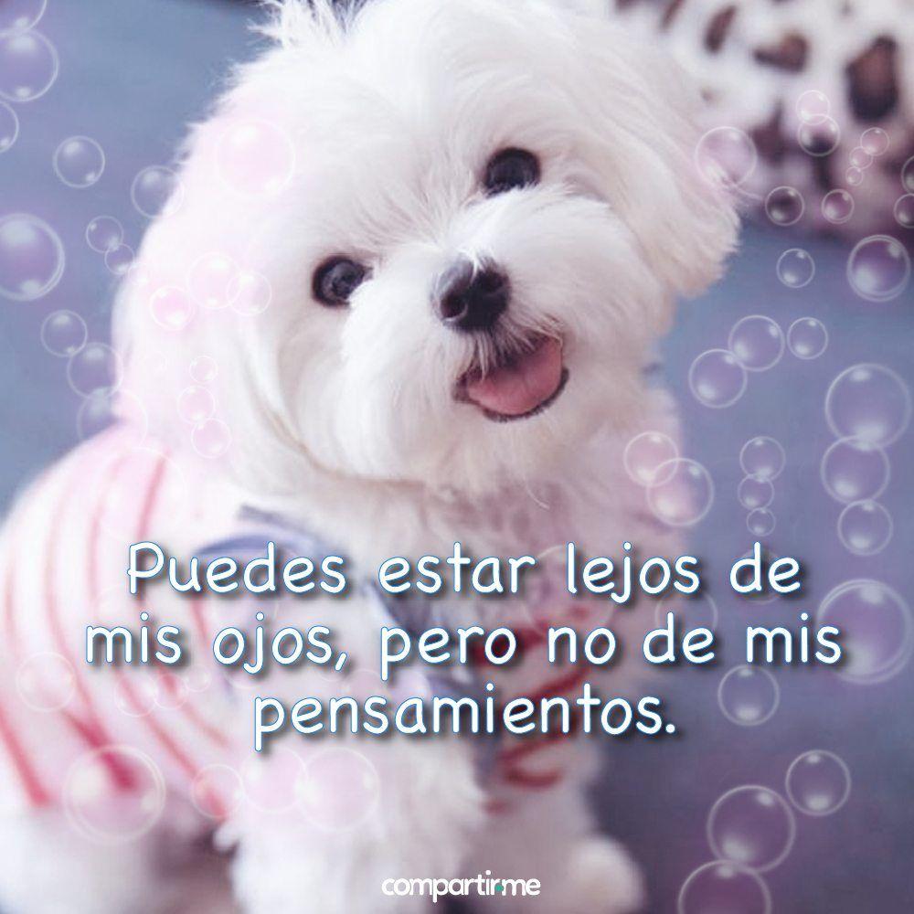 Imagenes Tiernas De Animales 7 Buenos Dias Corazon Frases Hola