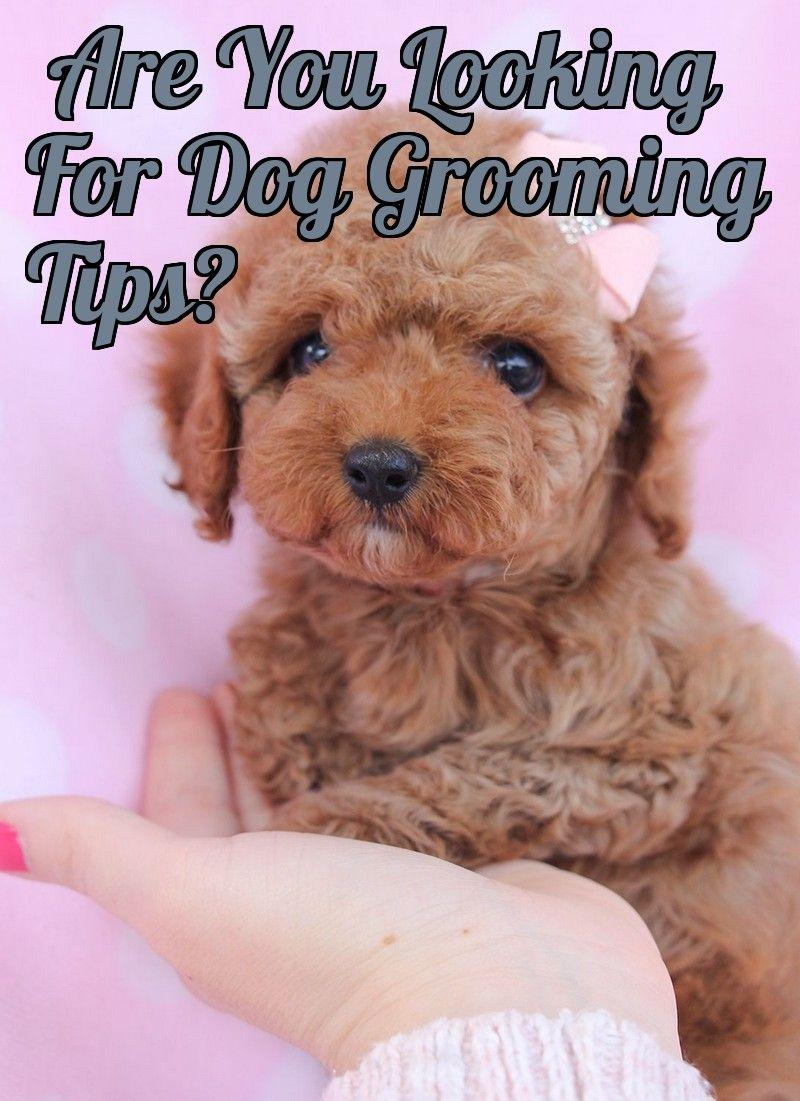 Understanding Dog Grooming Styles