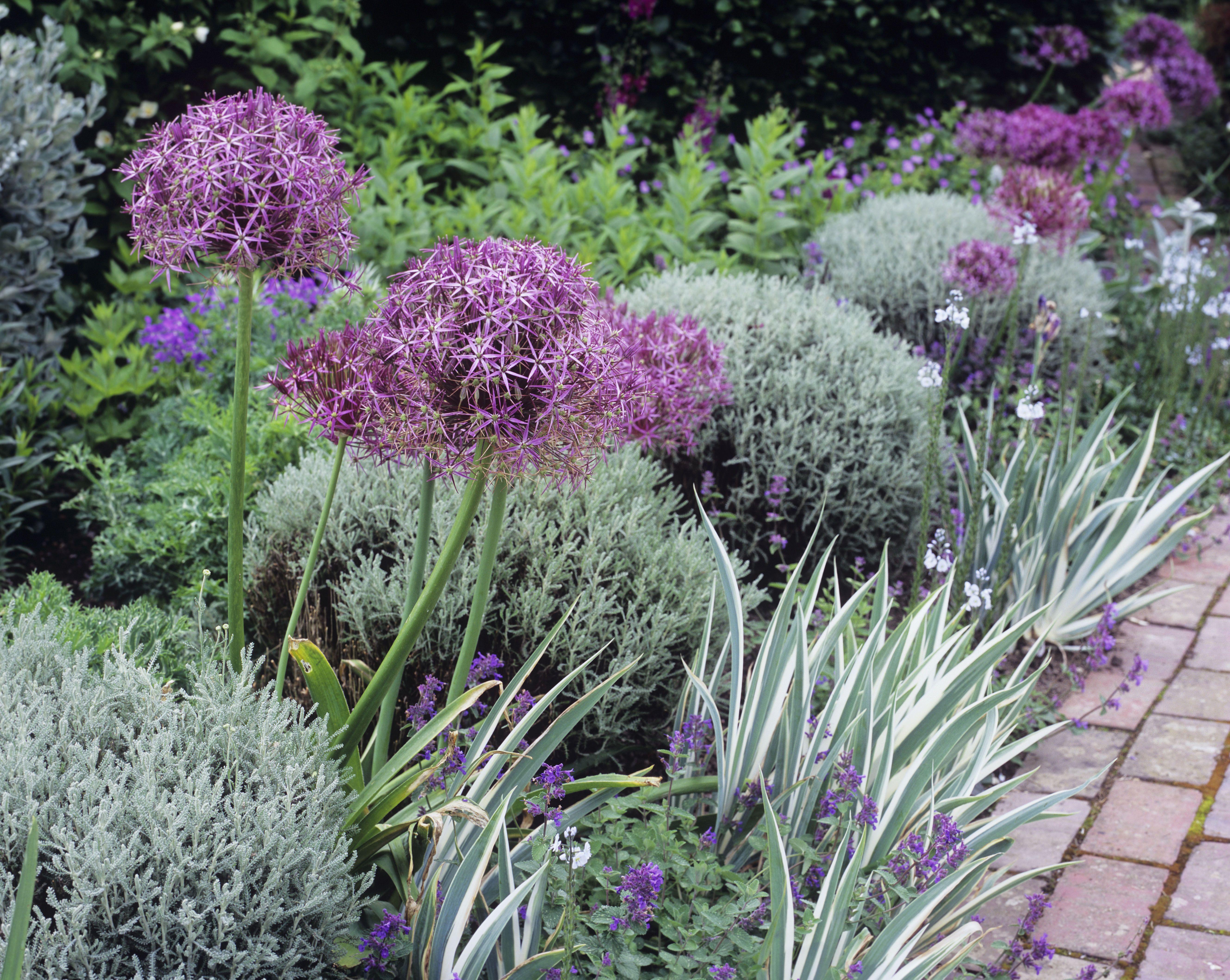 tips for beautiful garden borders gardens pinterest garden