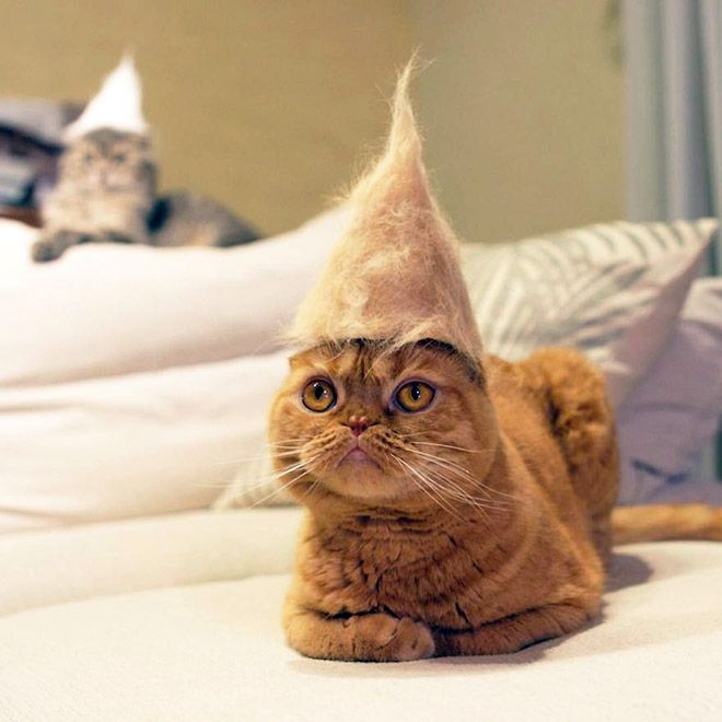 Cats In Hats Made From Their Own Hair