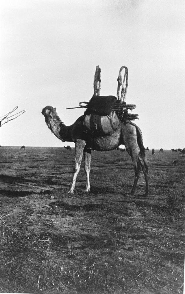 Gertrude Bell Archive Gertrude Bell Queen Of The Desert
