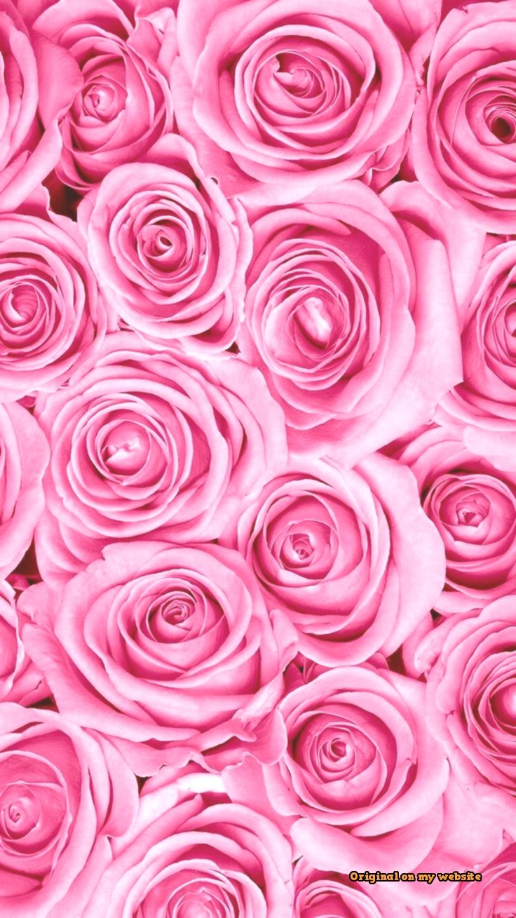 Wallpaper Celular - Amonlas rosas  #wallpapercelularbloqueorosa #wallpapercelularmedidas #wallpapercelularwhatsapp #wallpapercelularwhatsappazul