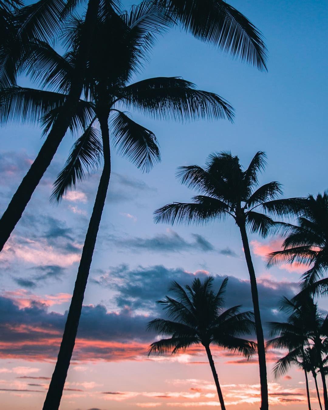 Palm Trees In Hawaii Fotografi Alam Pemandangan Abstrak Foto Alam