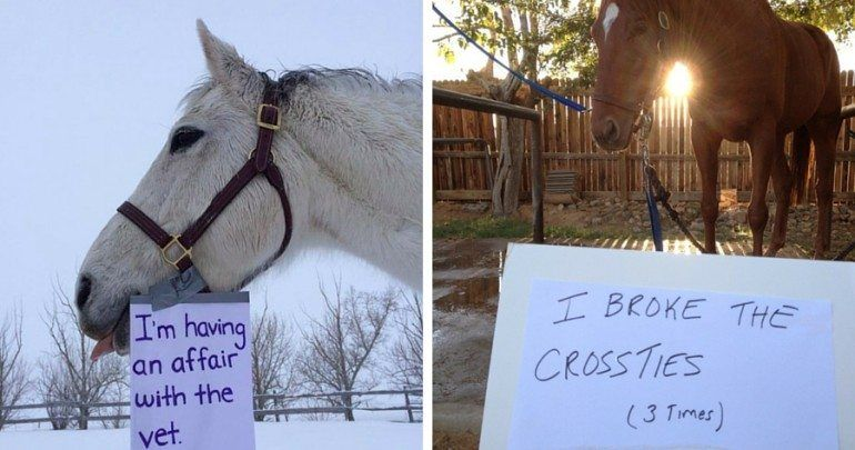12 Horse Shaming Photos That Will Make You Say 'Naughty, Naughty'