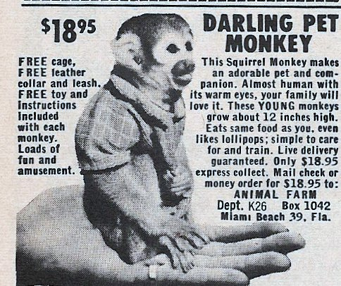 REMEMBER these Ads in the back of Comic Books, and Magazines?  I Do!