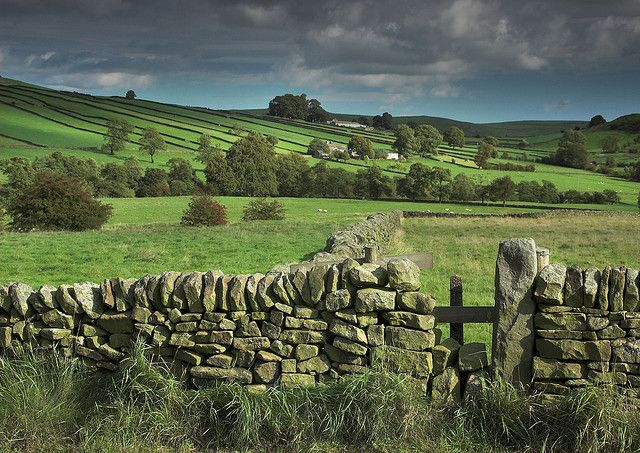 stone fence | stone fence in narrow fields peak district by alan e taylor
