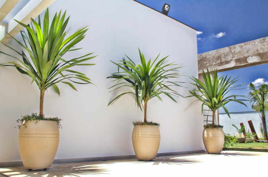 Vaso plastico para plantas sp pesquisa google piscina for Vaso piscina