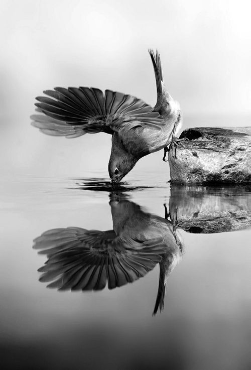So elegant und erstaunlich Reflexion # Fotografie # schwarz und weiß – #fotografieschwarzweiss