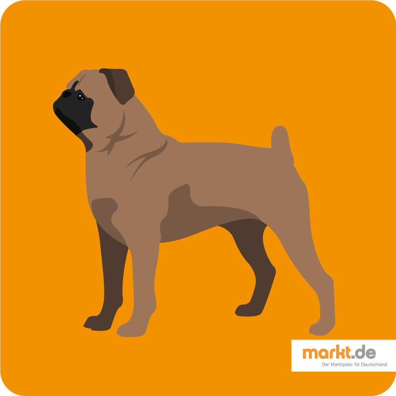Brabancon Charakter, Haltung, Pflege, Zucht Hunde