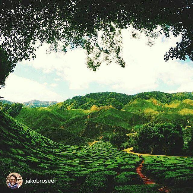 from jakobroseen Cameron Highlands Tea Plantation