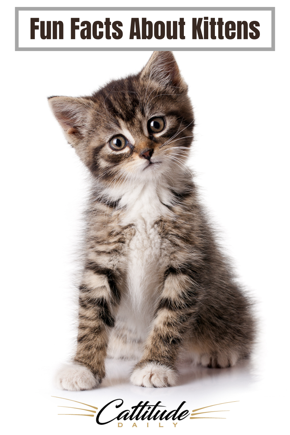 Pin On All Things Cats
