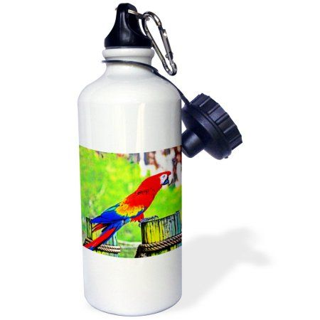 3dRose macaw hdr saturated bird image, Sports Water Bottle, 21oz, White