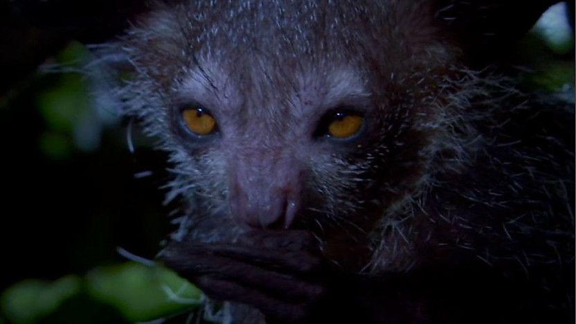 BBC - CBBC - Watch: Deadly Mission Madagascar