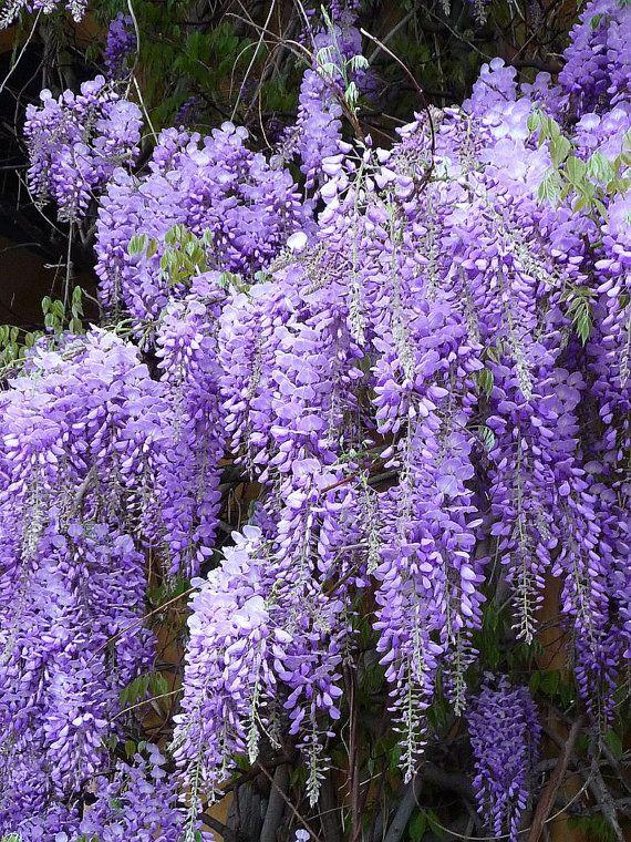 Friends R Us June Treasury Fru By Sherry On Etsy Wisteria Plant Garden Vines Fragrant Plant
