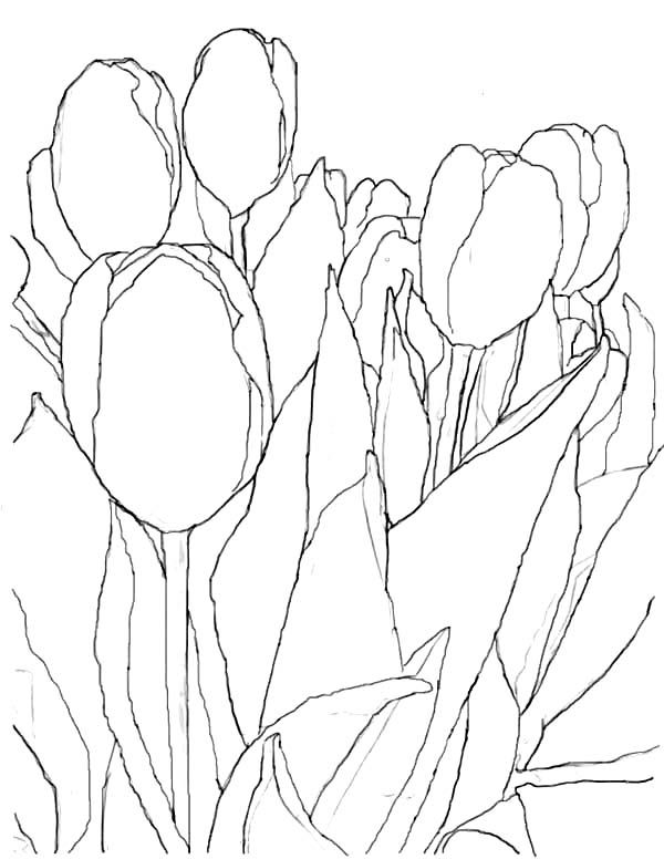 Tulips, : An Artistic Pencil Sketch of Tulips Coloring Page ...