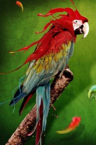 Download Free Colorful Parrot Iphone Wallpaper Mobile Wallpaper Contributed By Augustuss Colorful Parrot Iphone Wallp Colorful Parrots Parrot Animal Wallpaper Free download birds mobile wallpaper