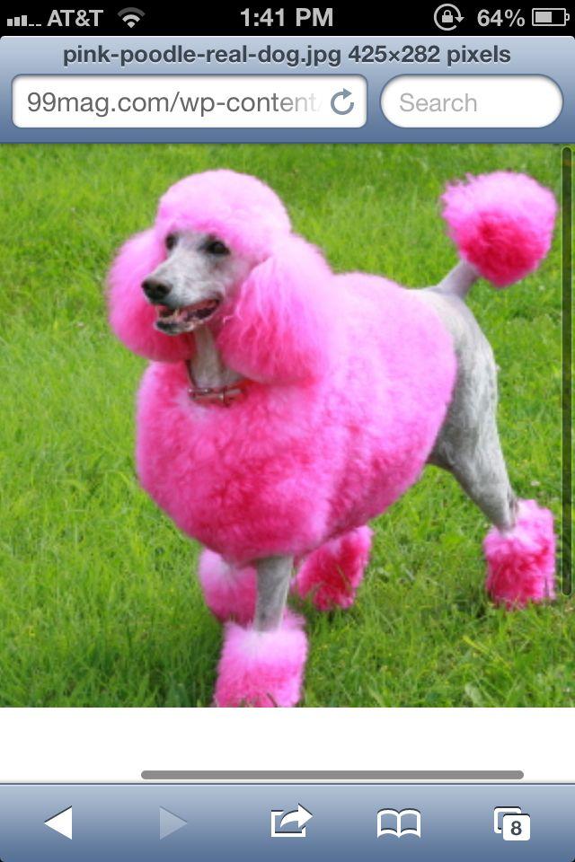 PINK! Poodle
