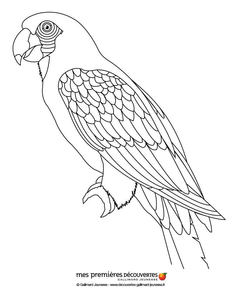 Coloriage d 39 un perroquet stained glass birds malen - Perroquet dessin ...