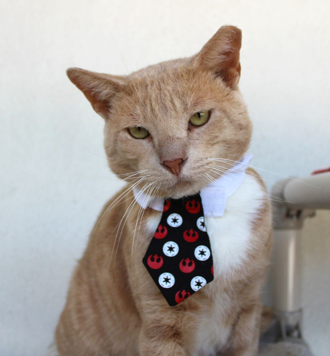 Good Afternoon I M Here To Talk To You About Catnip Bernard Cats And Kittens Cats Kittens