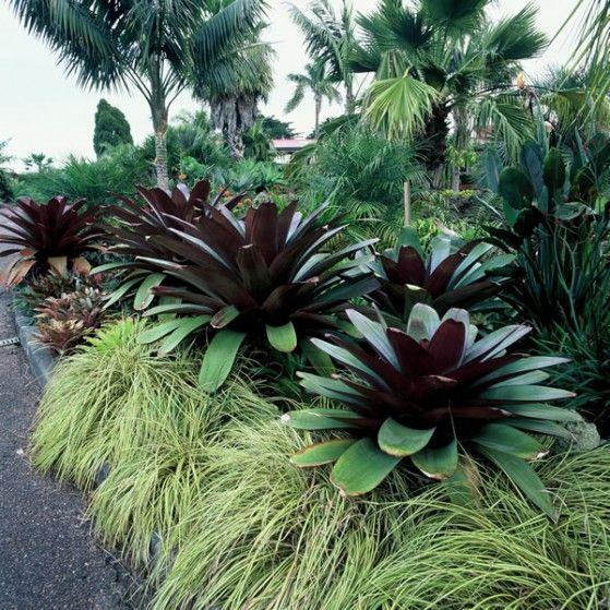 Alcantarea imperialis large image garden tropical for Vivero plantas tropicales
