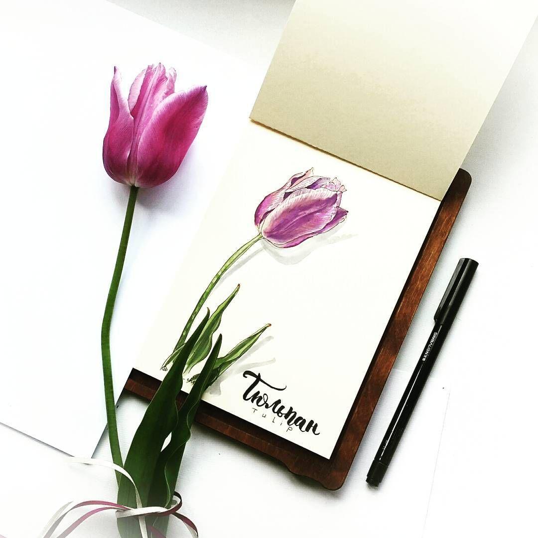 Тюльпаны цветные бокалы От ветра, танцуя, качаются, И ...