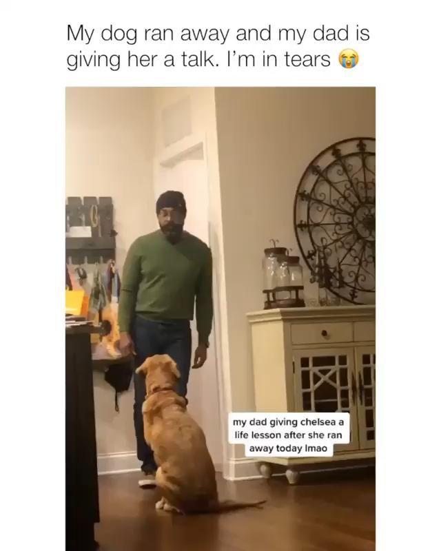 Talk With A Dog!