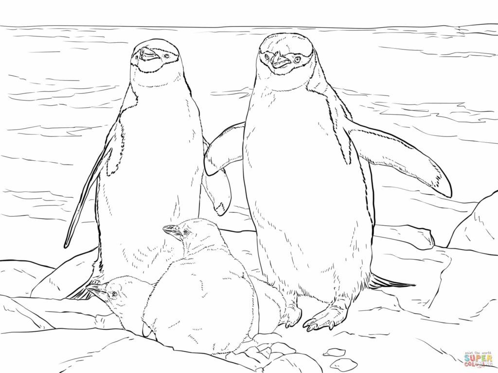 Penguin Coloring Pages Penguin Coloring Pages Penguin Coloring