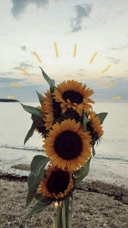 Pin Oleh Asma Ghomrawi Di Sari Sekerleme Yellow Candy Wallpaper Bunga Matahari Bunga Matahari Latar Belakang