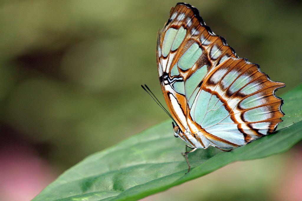 Butterfly's in Winter | Most beautiful butterfly ...
