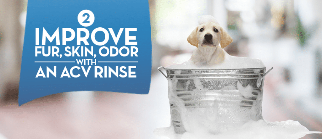 Grooming Your Dog At Home Apple cider vinegar dogs