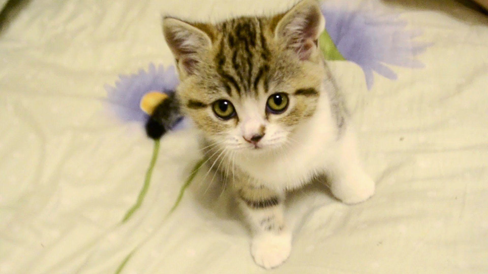 Cute Little Kitten Cute Cute Kitten Gif Cute Little Animals Cute Little Kittens