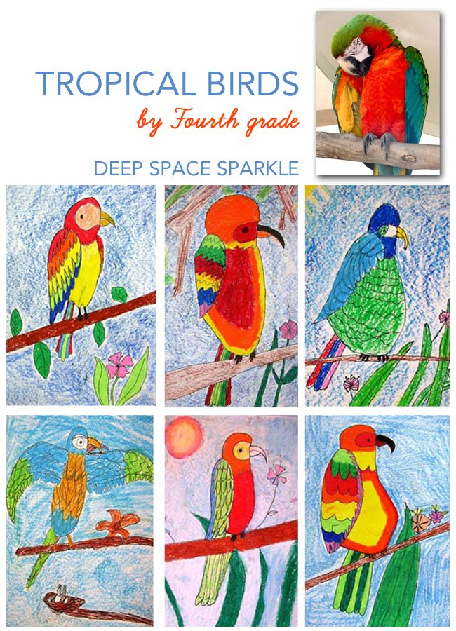 Parrot or tropical bird art lesson