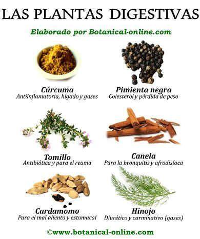Plantas digestivas herbolari ess ncies pinterest reflujo acidez y remedios naturales - Meteorismo remedios ...