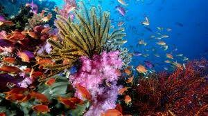 Epingle Par Helene Milleville Sur Coraux Poisson Image Recif Corallien Fond D Ecran Corail
