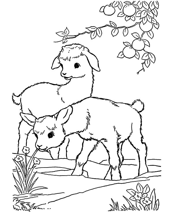 Pin On Goat Coloring Pages