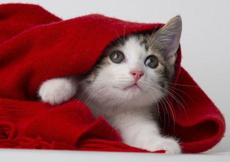 Kittens are much different from grown cats as they need a balanced diet of dry and wet food and plenty of water, but avoid the pitfalls so your feline doesn't become overweight.