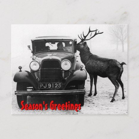 Funny Christmas Vintage Car with a Reindeer Holiday Postcard | Zazzle.com
