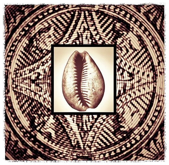 Cowrie Shell with detailed design background Coastal by Finandivy, $25.00