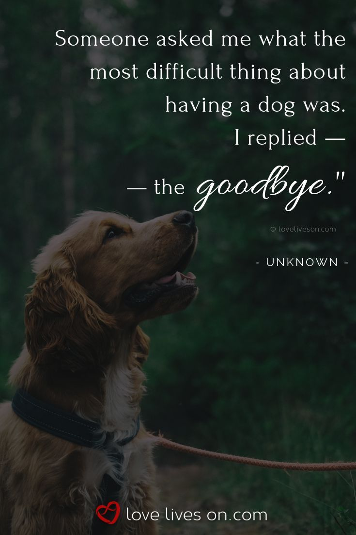 You Are Being Redirected Pet Quotes Dog Dog Quotes Dogs