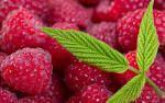 close up fruit - Google Search