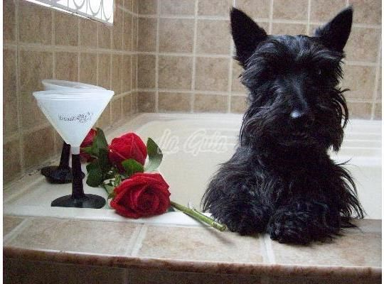 Well now, I've had a bubble bath, the Mistress gave me a rose, Mac and I are not in trouble any longer and all is good........