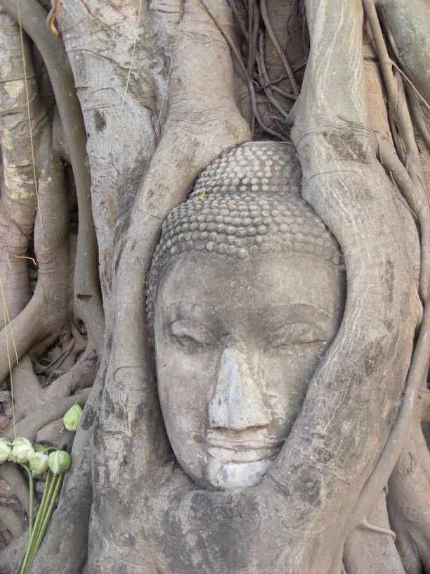 One of my favourite photos from Ayutthaya, the Buddhas head cradled by tree roots. Discovered by Jade Johnston OurOyster.com at Ayutthaya, #Thailand