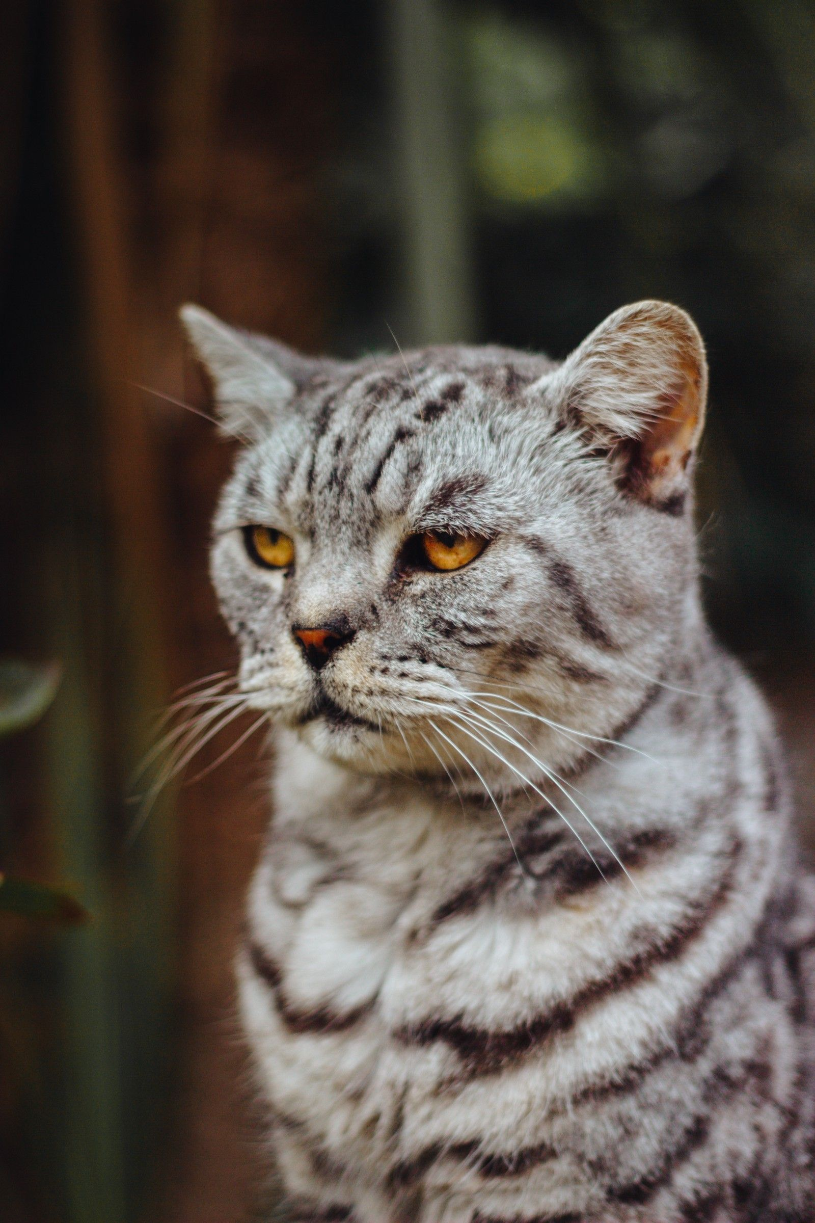 What I Wish I D Known Before Getting Cats Silver Tabby Cat Cat Pics Cats