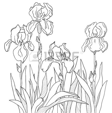 The Sketch From A Four Flowers Flower Line Drawings Flower Drawing Iris Drawing