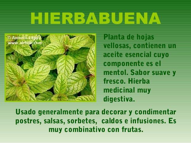 Hierbas y especias 10 638 479 plantas y for Hierbas y plantas medicinales