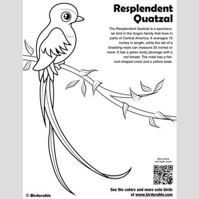 Image Result For Free Coloring Page Quetzal Bird Coloring Pages